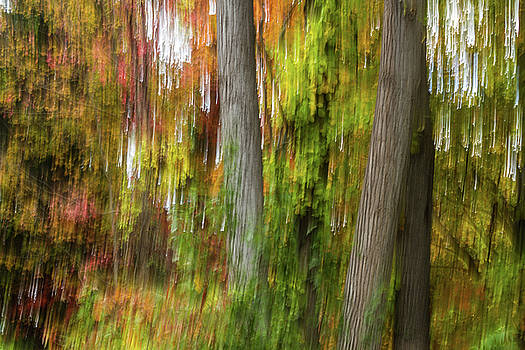 Light Dance With the Trees, Autumn Foliage Abstract by Linda Rasch