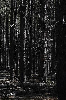 Limb Light by David Kehrli