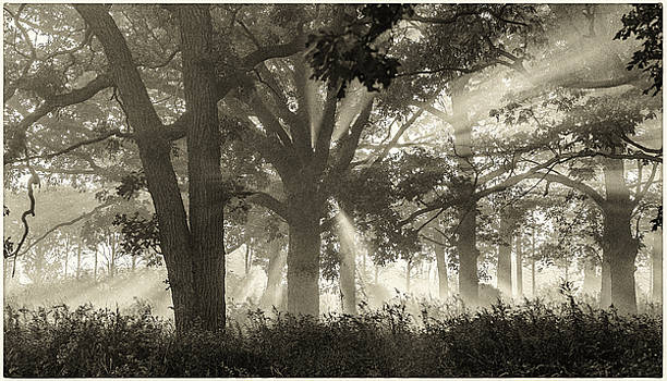 Judith Barath - Light in the Forest