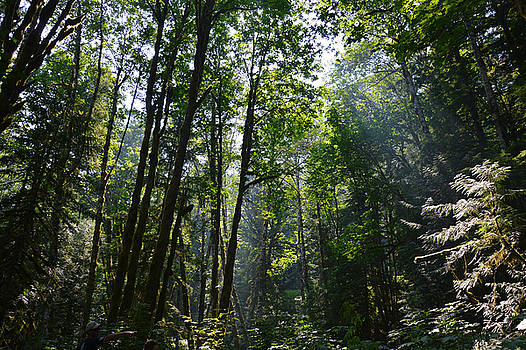 Light In The Forest by SimplyCMB