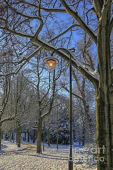 Patricia Hofmeester - Light in the winter