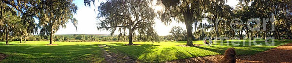 Jost Houk - Light of the Florida Landscape