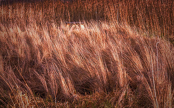 Light On Blowing Grass #g9 by Leif Sohlman