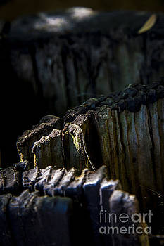 Light on Rotted Log by Rich Governali