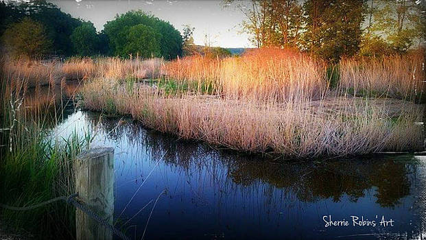 Light on the Marsh by Sherrie Robins