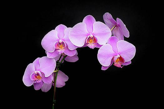 Light on the Purple Please by Denise Bird