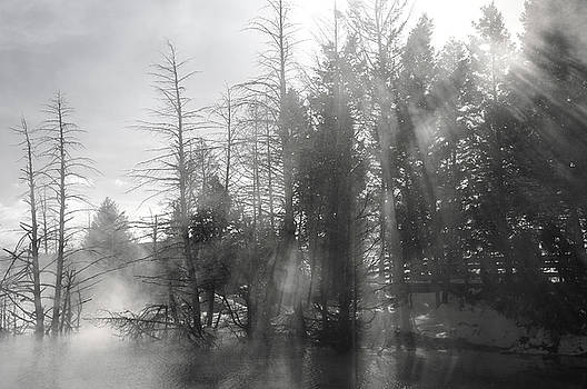Reimar Gaertner - Light rays streaming through pine trees and steam at Canary Spri