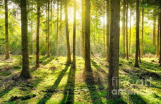 Light shining through in forest _Enhanced by Tin Tran