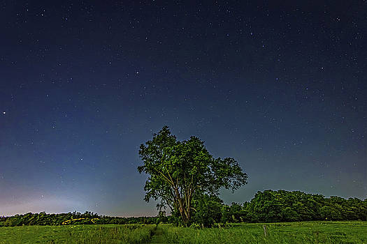 Light Show - Fireflies vs The Stars 3 by Steve Harrington