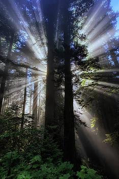 Light Source by Vincent James
