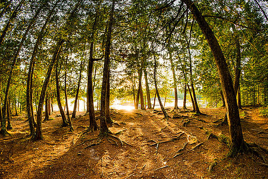 Light Through the Boundary Waters by Christopher Broste