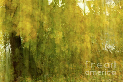 Light Through the Leaves by Linda Joyce