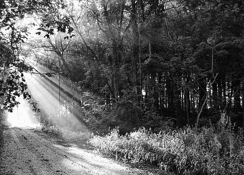 Light Through The Trees by Off The Beaten Path Photography - Andrew Alexander