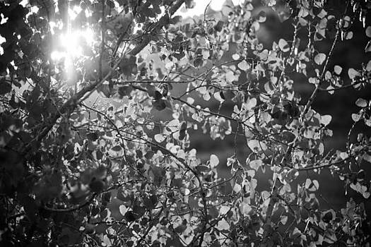 Light Thru Leaves by Sharon Wunder Photography