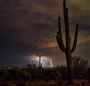 Light Up the Desert Night  by Saija Lehtonen