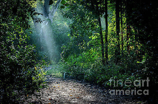 Lighting the trail by Thomas Gibson