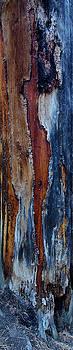 Lightning Scar by Tom Daniel