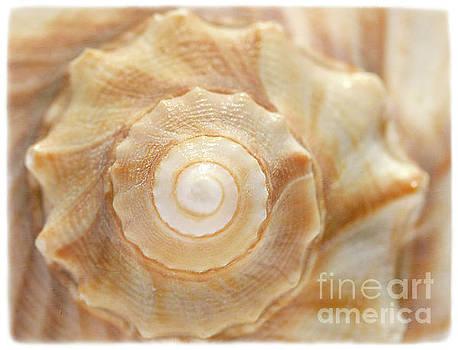 Lightning Whelk by Cindi Ressler