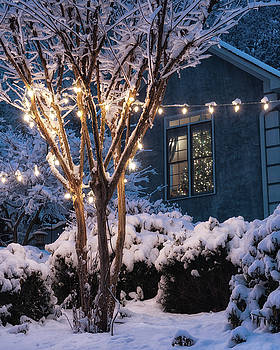 Lights and a Tree by Daryl Clark