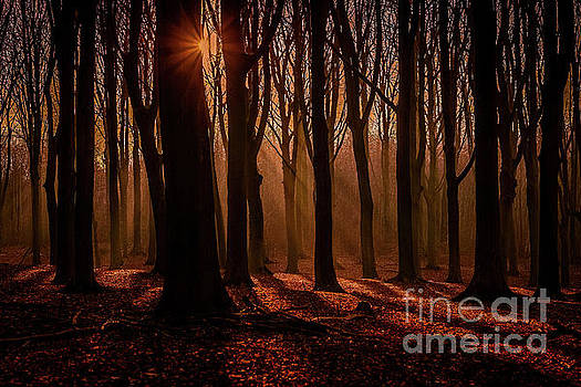 Lights and shadows by Claudia M Photography