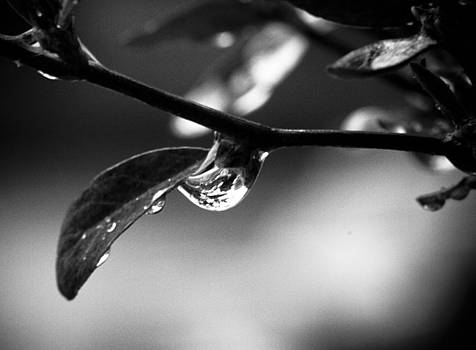 Like a drop to a flower by Leo Bello