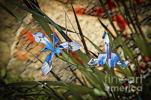 Jon Burch Photography - Like Blue Birds of Happiness