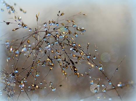 Rosanne Jordan - Like Blue Tears