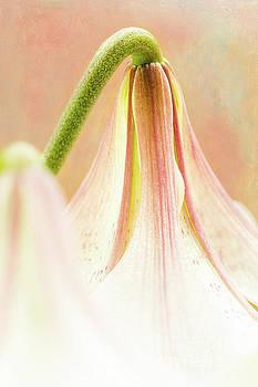 Like Fairies by Marilyn Cornwell