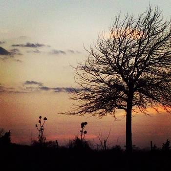 #like #love #leaves #fall #winter by Shyann Lyssyj