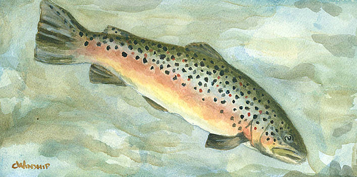 Lil Brown Trout by Christine Winship
