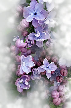 Lilac blooming by Marinela Feier