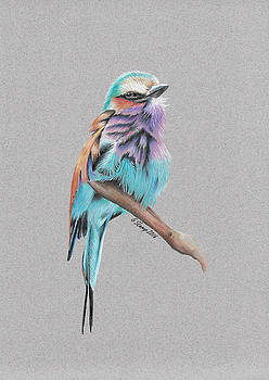 Lilac Breasted Roller by Gary Stamp
