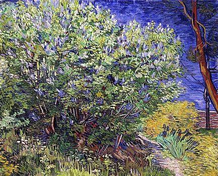 Vincent van Gogh - Lilac Bush