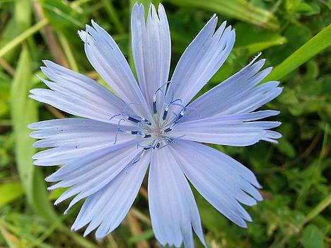 Lilac Flower by Carol Lynch