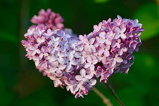 Lilac Heart by Sheila Price