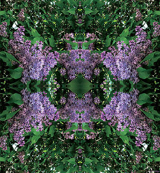 Lilac Mandala by Celtic Artist Angela Dawn MacKay