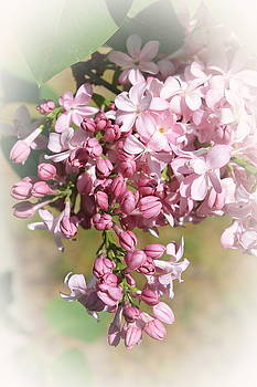 Lilac with Vignette by Francie Davis