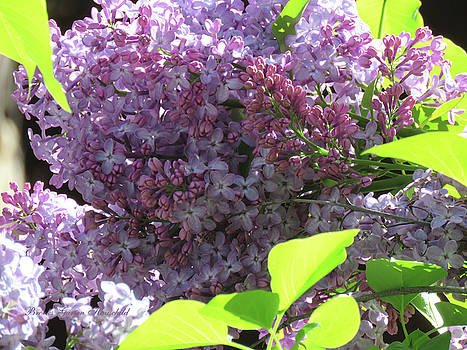 Lilacs and Leaves - Photography - Spring Flowers - Macro by Brooks Garten Hauschild