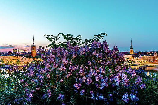 Lilacs and Sunset to Blue Hour Transition over Gamla Stan in Stockholm by Dejan Kostic