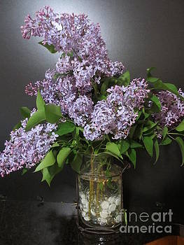 Lilacs by Sandra Spincola