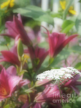 Lilies and Lace by Helene Guertin