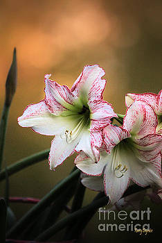 Lilies at Dusk by Karry Degruise