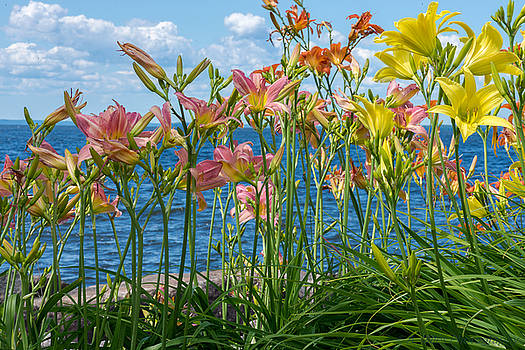 Lilies at the Waterfront by Andrew Miles