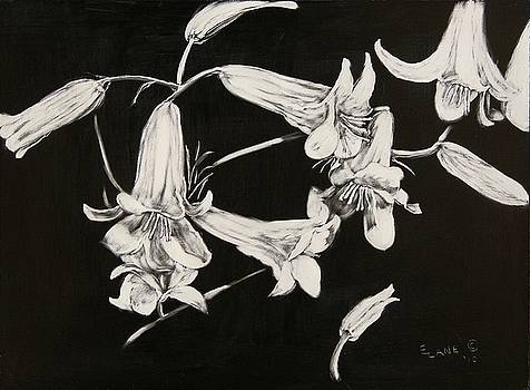 Lilies Black and White by Elizabeth Lane