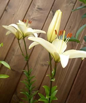 Lilies by Jill Kelsey