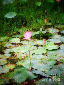 Lilies of Kerala by Hilary England
