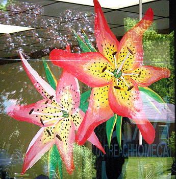 Scarlett Royal - Lilies