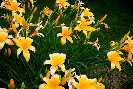 Sherri Williams - Lilies