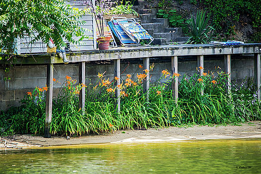 Lilies Under The Dock by Brian Wallace