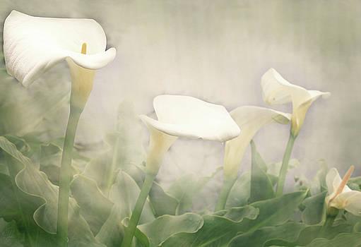 Lillies in the Mist by Margaret Hormann Bfa